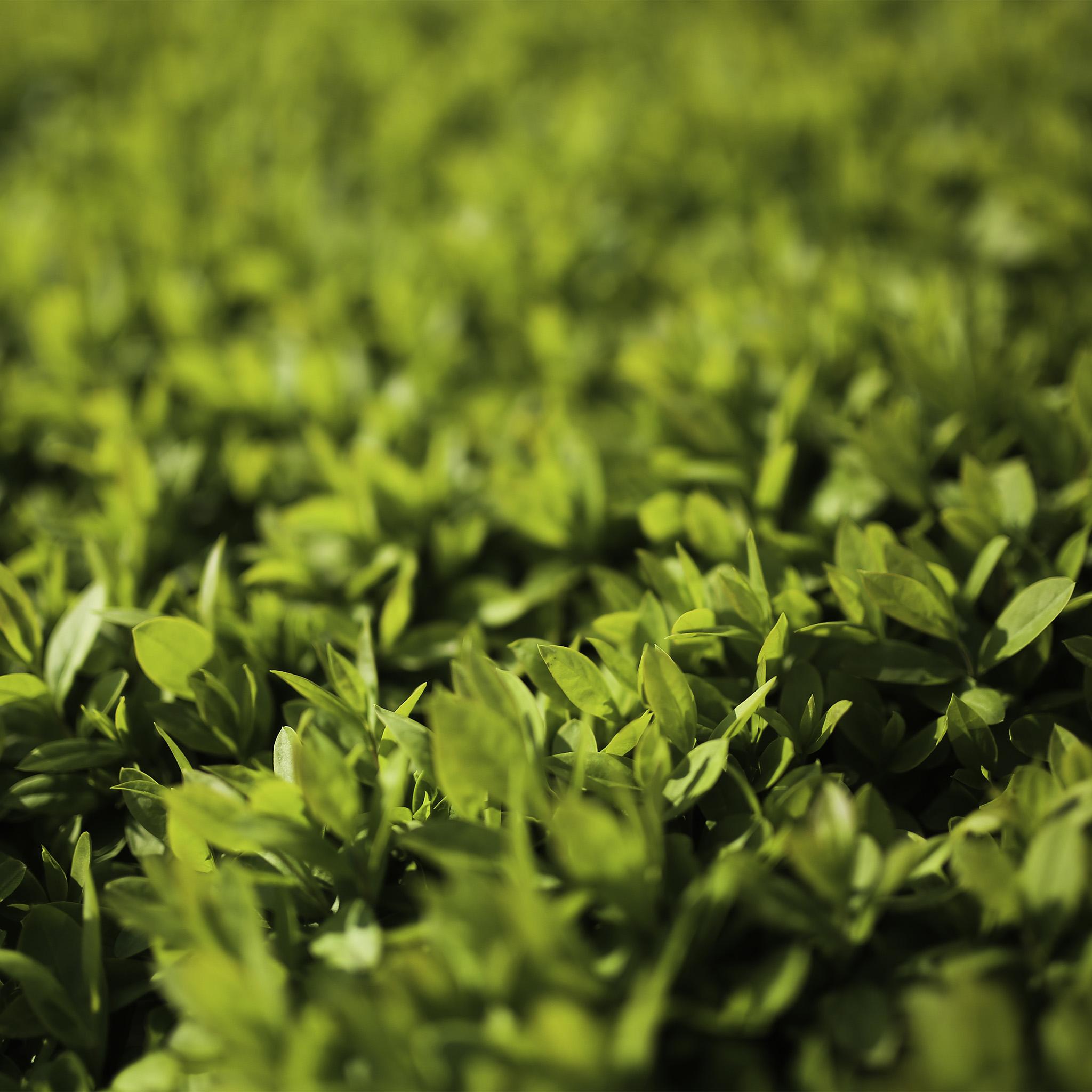 Freeios7 Com Iphone Wallpaper Mx53 Leaf Spring Green