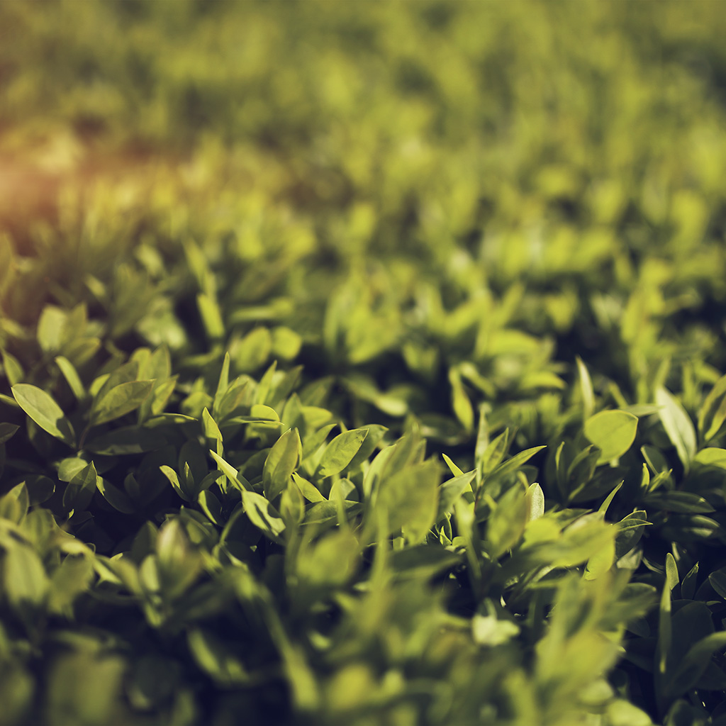 wallpaper-mx54-leaf-spring-green-nature-young-bokeh-flare-wallpaper