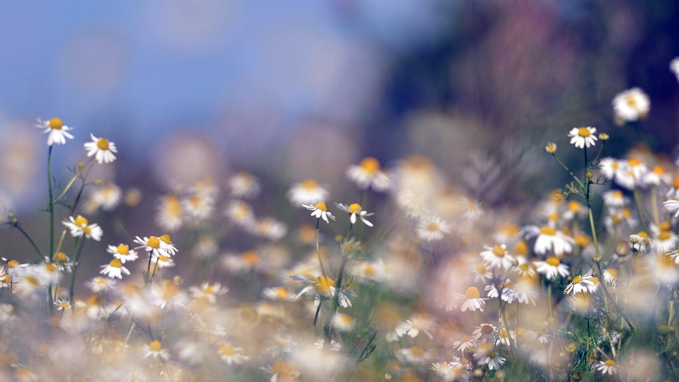 Mx65 Flower Bokeh White Spring Nature Blue Wallpaper