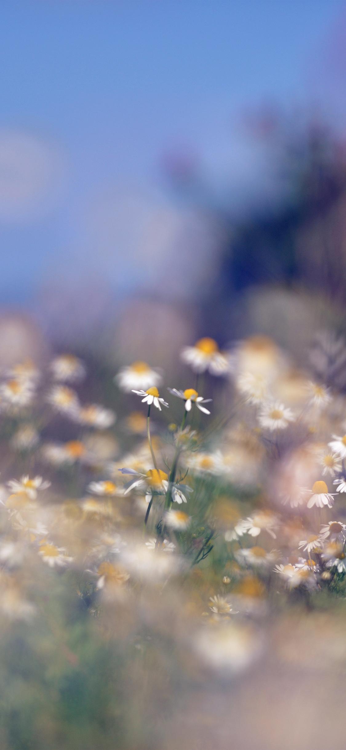 iPhoneXpapers.com-Apple-iPhone-wallpaper-mx65-flower-bokeh-white-spring-nature-blue