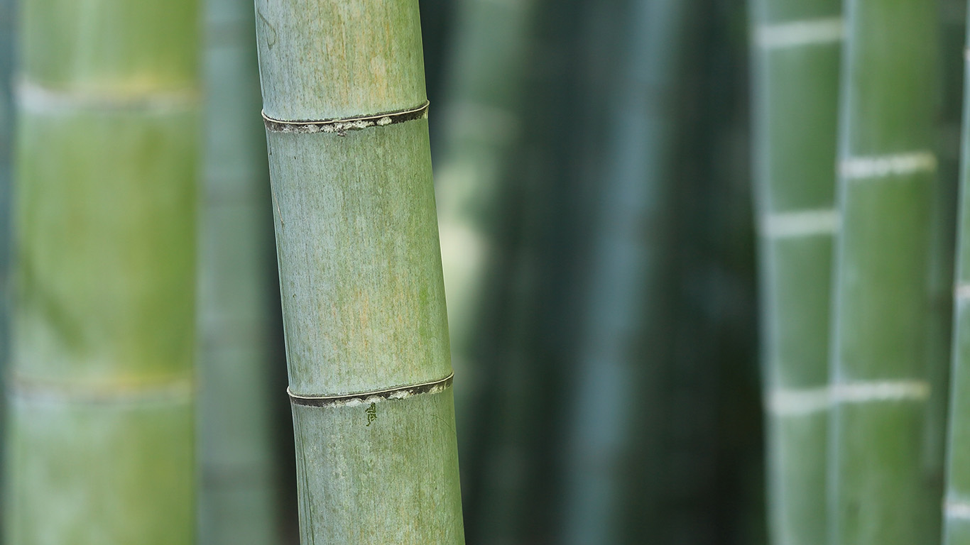 desktop-wallpaper-laptop-mac-macbook-airmx90-bamboo-nature-tree-green-wallpaper