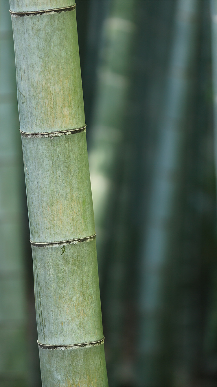 iPhone7papers.com-Apple-iPhone7-iphone7plus-wallpaper-mx90-bamboo-nature-tree-green