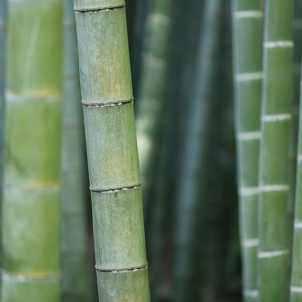 android-wallpaper-mx90-bamboo-nature-tree-green-wallpaper