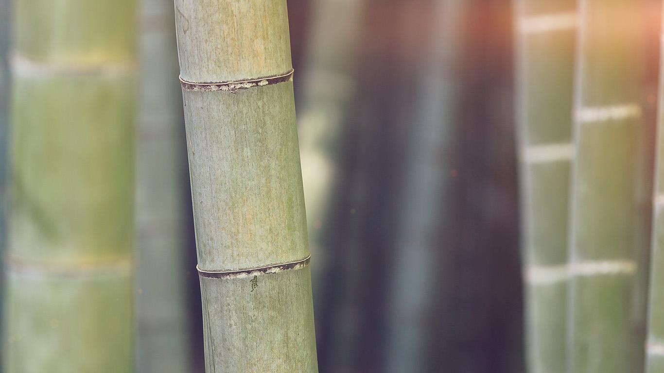 desktop-wallpaper-laptop-mac-macbook-air-mx91-bamboo-nature-tree-blue-wallpaper