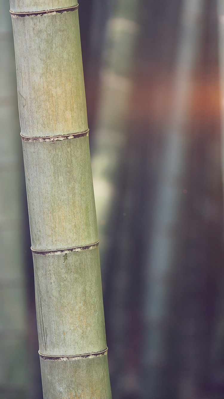 iPhone6papers.co-Apple-iPhone-6-iphone6-plus-wallpaper-mx91-bamboo-nature-tree-blue
