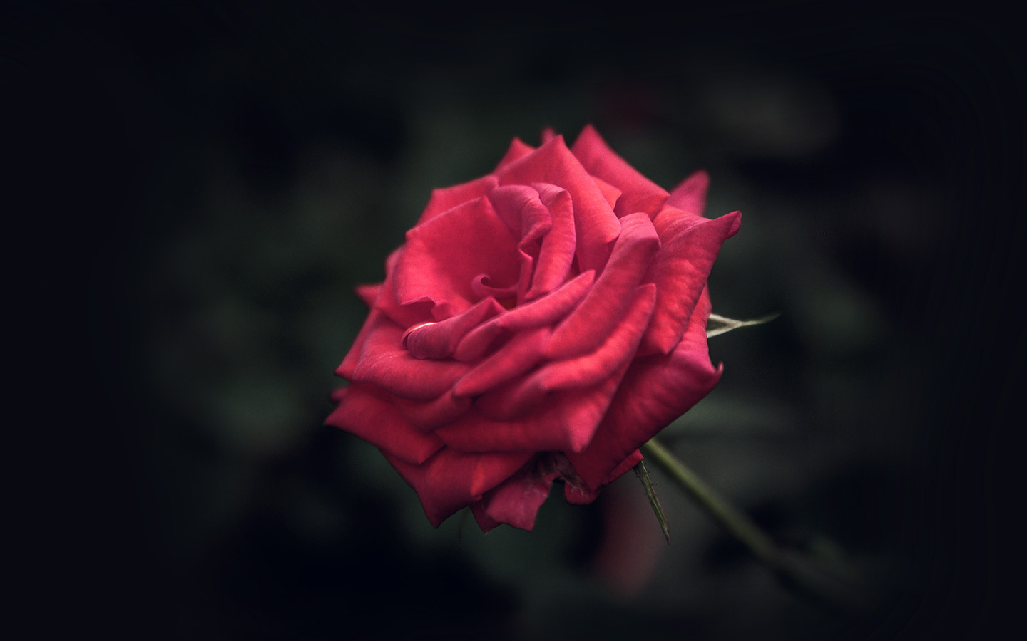 short essay on favorite flower rose Free red rose papers, essays, and every rose has its thorn - a rose makes the perfect flower to a rose for emily - a rose for emily—essay the short story.