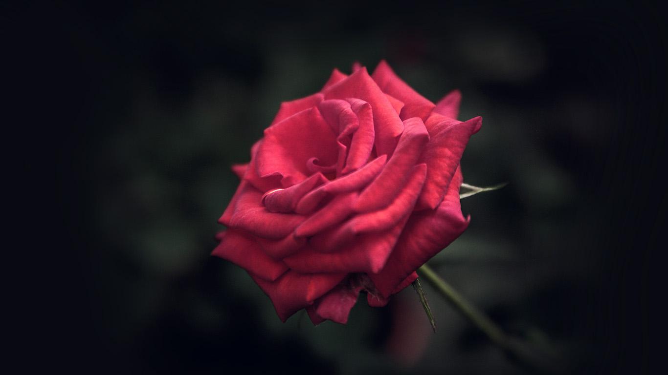 desktop-wallpaper-laptop-mac-macbook-air-my31-rose-flower-red-love-nature-blue-wallpaper