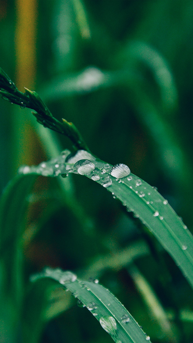 freeios8.com-iphone-4-5-6-plus-ipad-ios8-my35-grass-drop-water-rain-nature-forest