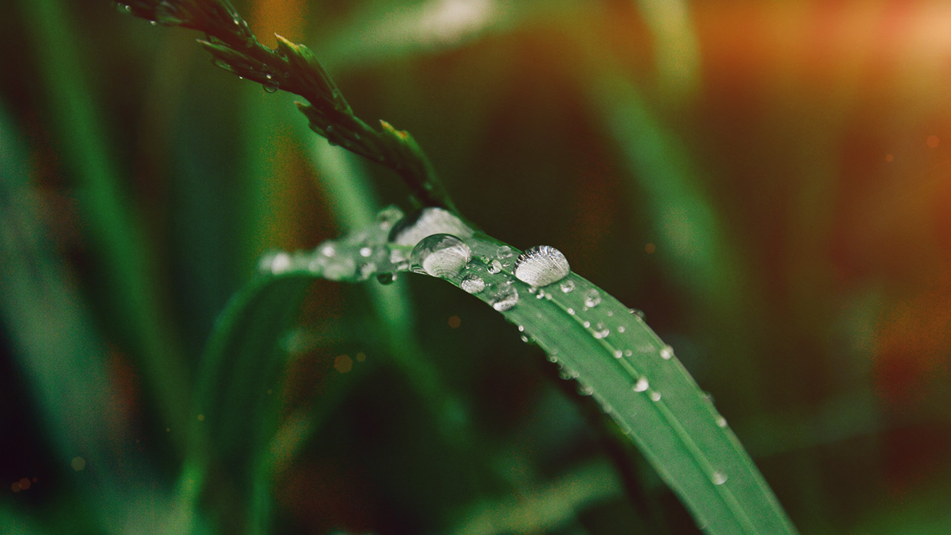 desktop-wallpaper-laptop-mac-macbook-air-my36-grass-drop-water-rain-nature-forest-flare-wallpaper