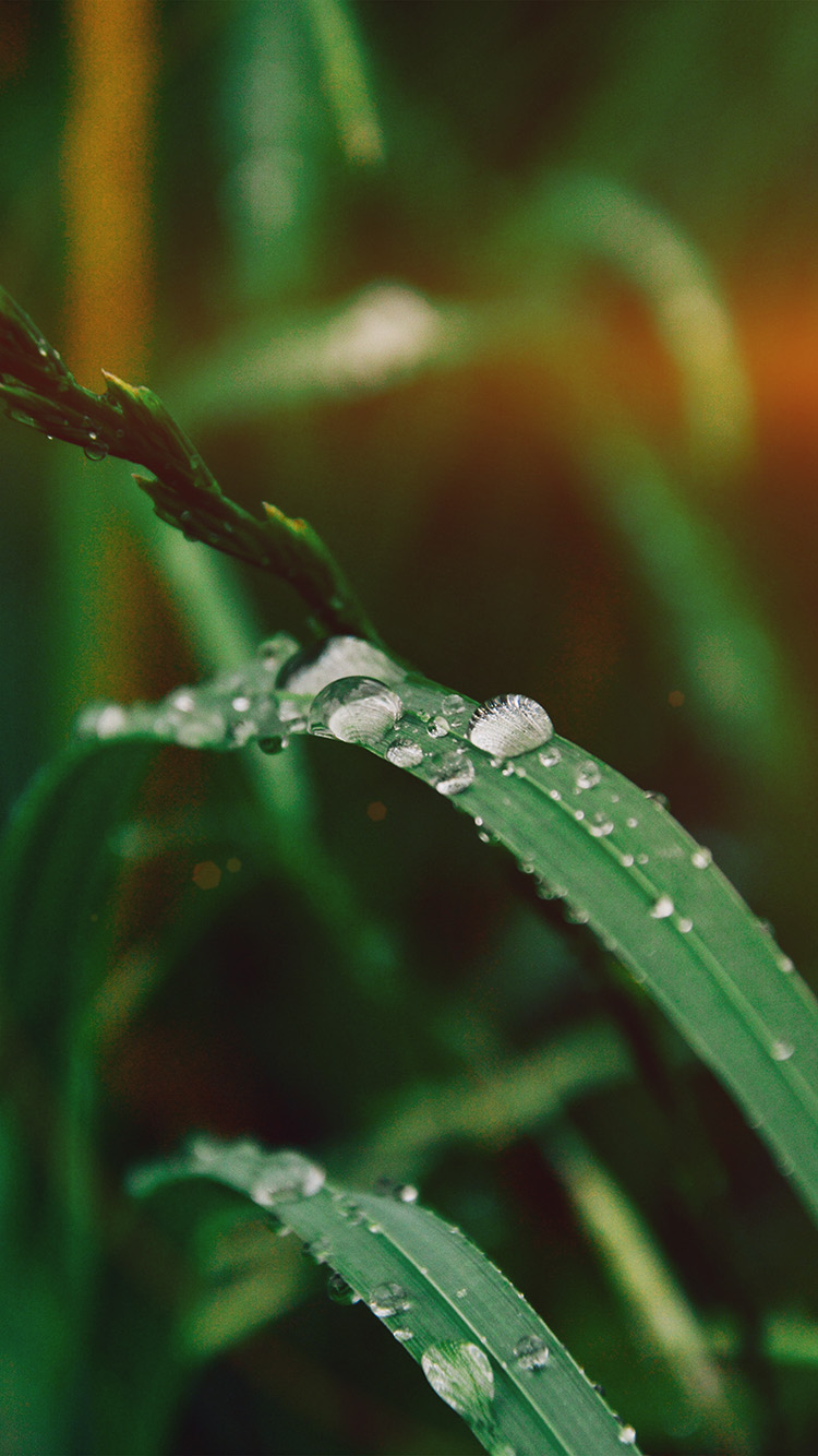 iPhone6papers.co-Apple-iPhone-6-iphone6-plus-wallpaper-my36-grass-drop-water-rain-nature-forest-flare