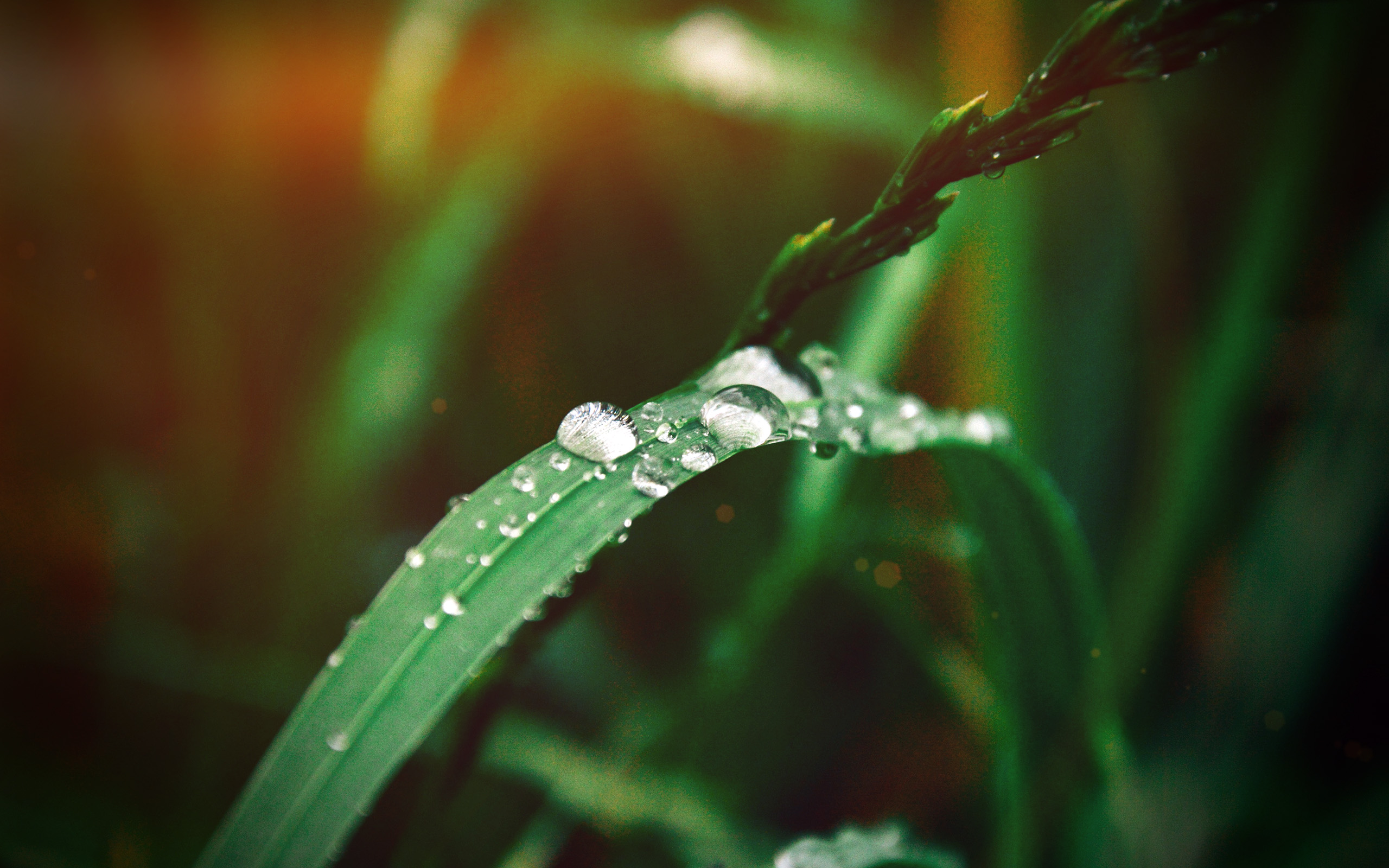 My37 Grass Drop Water Rain Nature Forest Flare Vignette