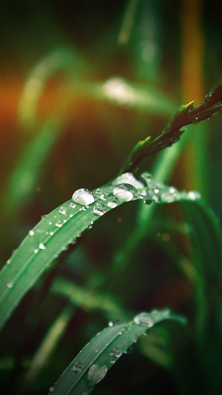 iPhonepapers.com-Apple-iPhone-wallpaper-my37-grass-drop-water-rain-nature-forest-flare-vignette