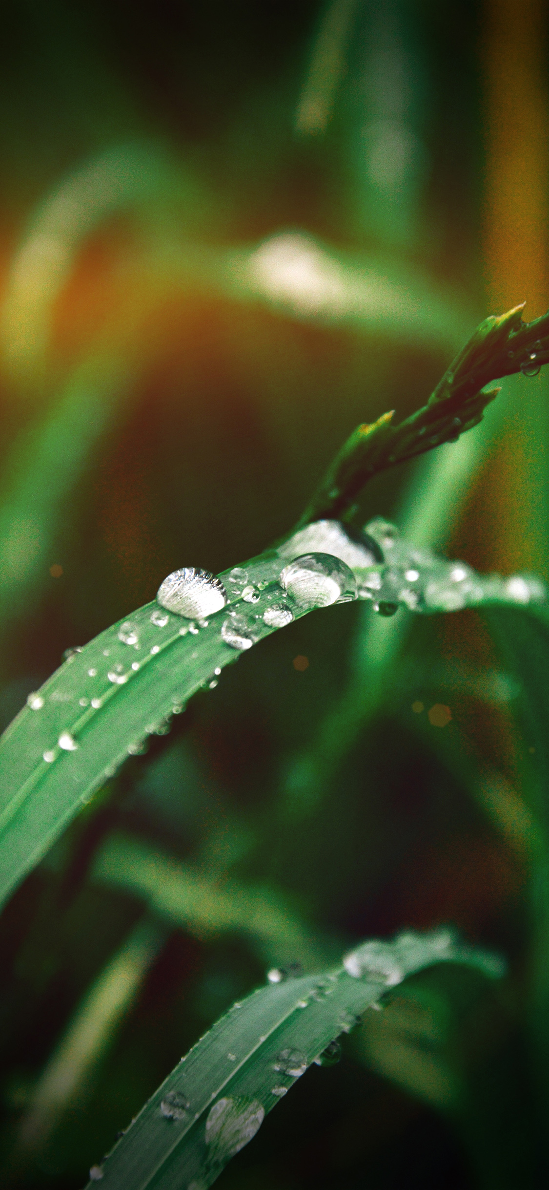 iPhonexpapers.com-Apple-iPhone-wallpaper-my37-grass-drop-water-rain-nature-forest-flare-vignette