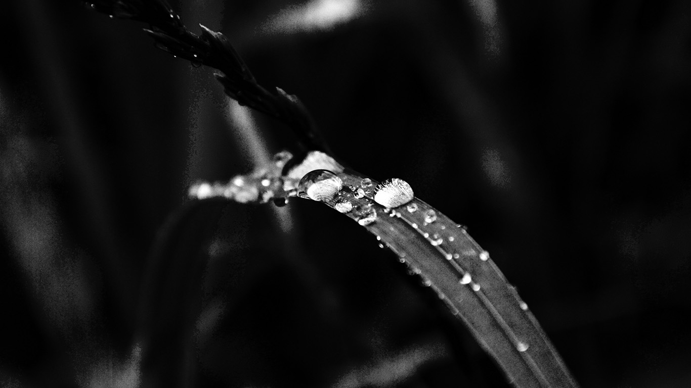 desktop-wallpaper-laptop-mac-macbook-air-my38-grass-drop-water-rain-nature-forest-dark-bw-wallpaper