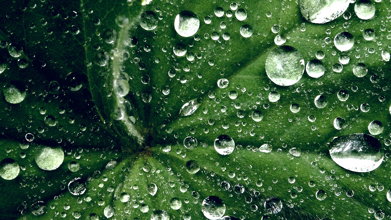 desktop-wallpaper-laptop-mac-macbook-air-my46-water-drop-on-leaf-summer-green-live-wallpaper