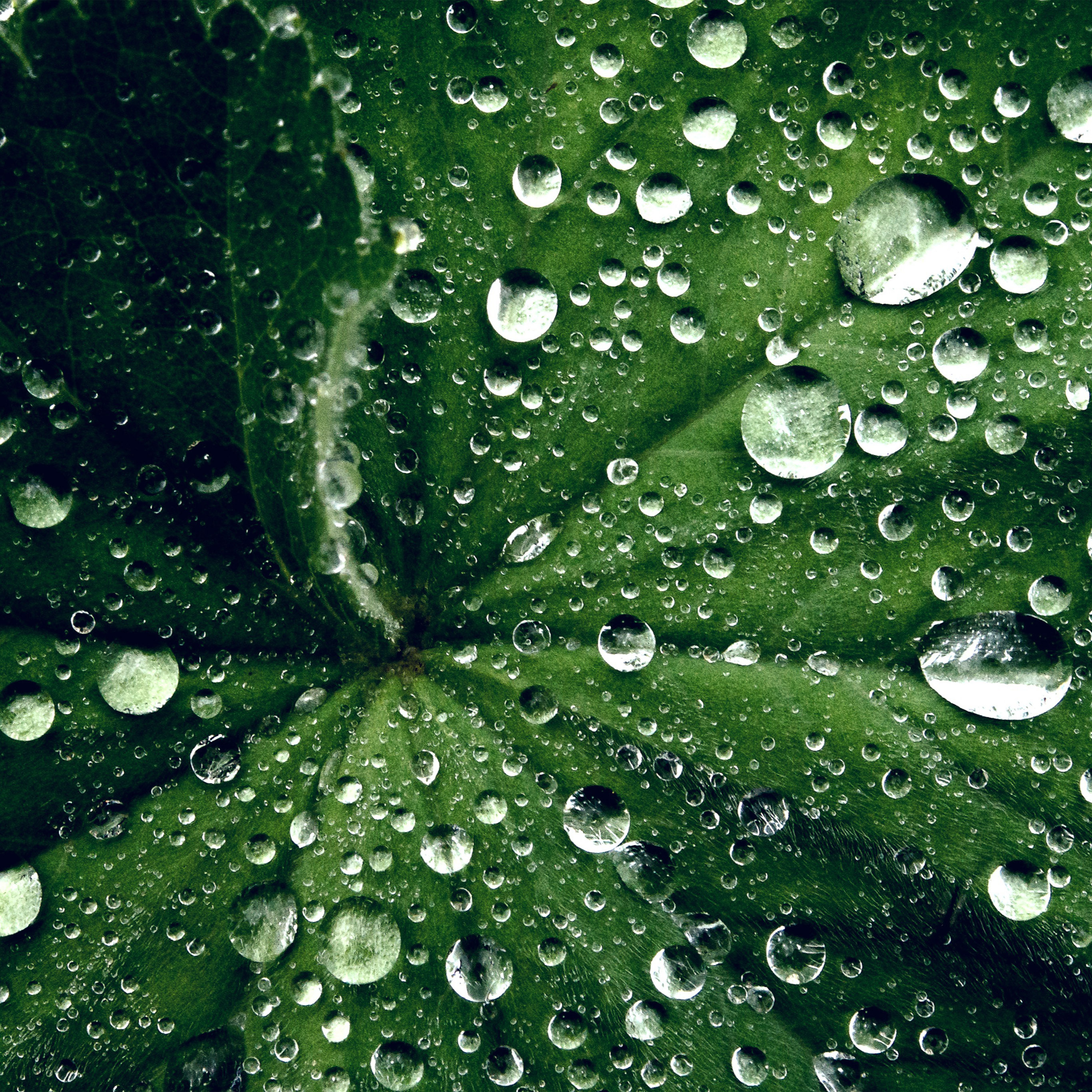 My46 Water Drop On Leaf Summer Green Live Wallpaper