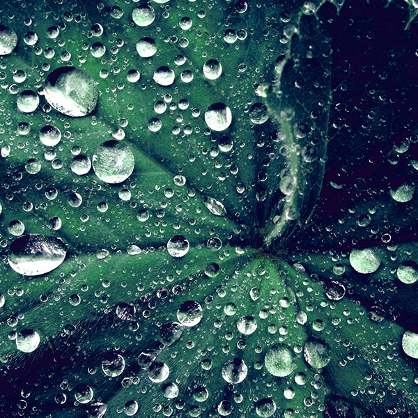 iPapers.co-Apple-iPhone-iPad-Macbook-iMac-wallpaper-my47-water-drop-on-leaf-summer-green-live-blue-wallpaper
