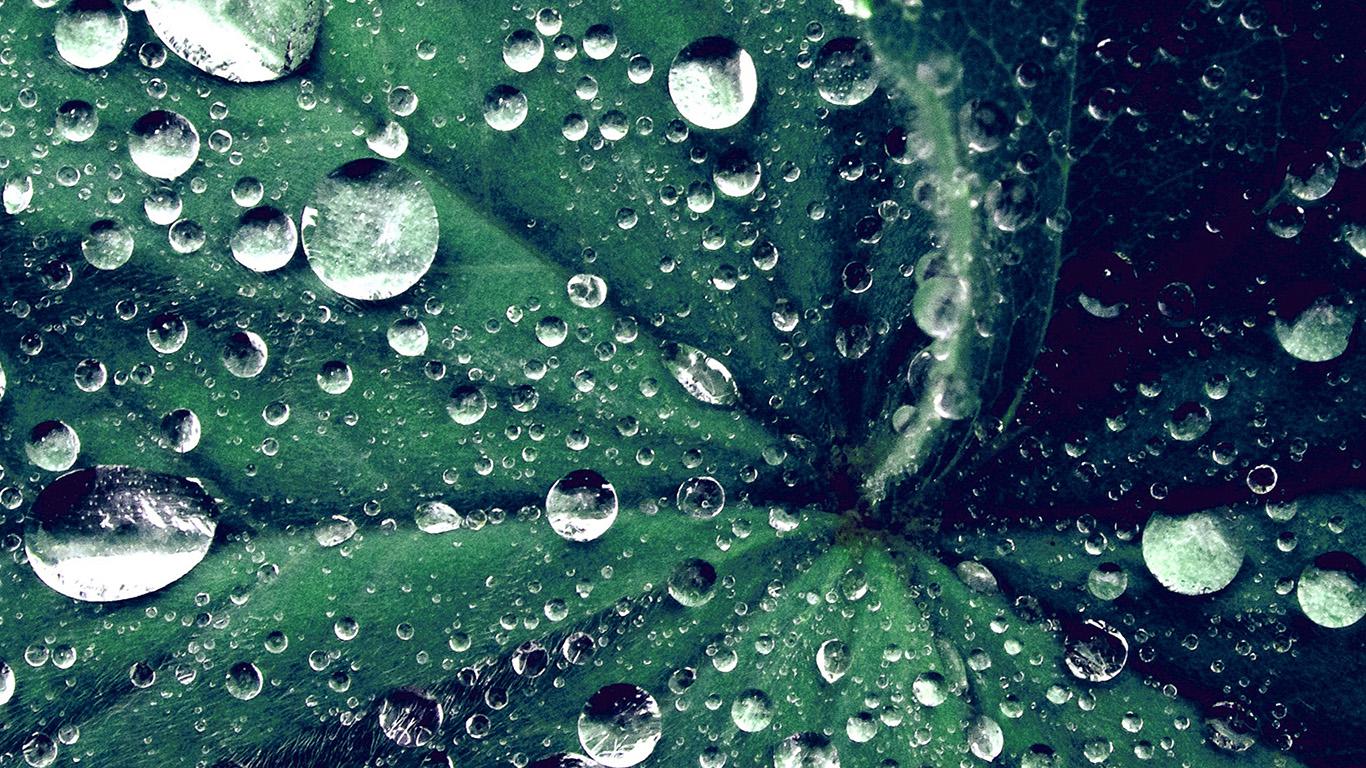 desktop-wallpaper-laptop-mac-macbook-air-my47-water-drop-on-leaf-summer-green-live-blue-wallpaper