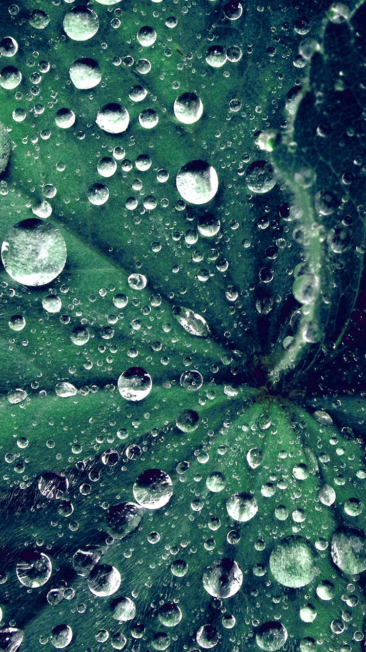 iPhone6papers.co-Apple-iPhone-6-iphone6-plus-wallpaper-my47-water-drop-on-leaf-summer-green-live-blue