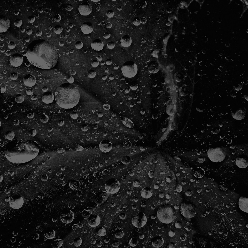 android-wallpaper-my50-water-drop-on-leaf-summer-dark-bw-live-black-wallpaper