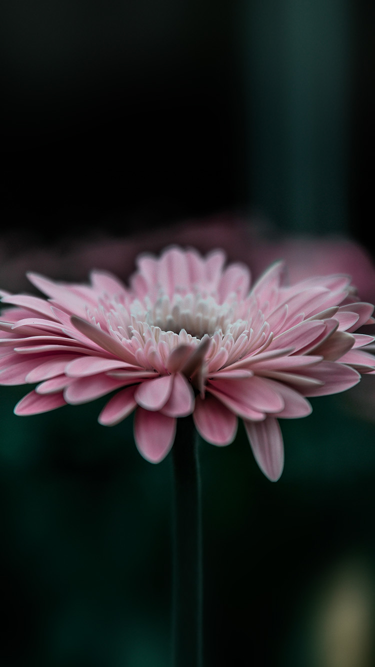 iPhone6papers.co-Apple-iPhone-6-iphone6-plus-wallpaper-my62-flower-pink-calm-nature-bokeh