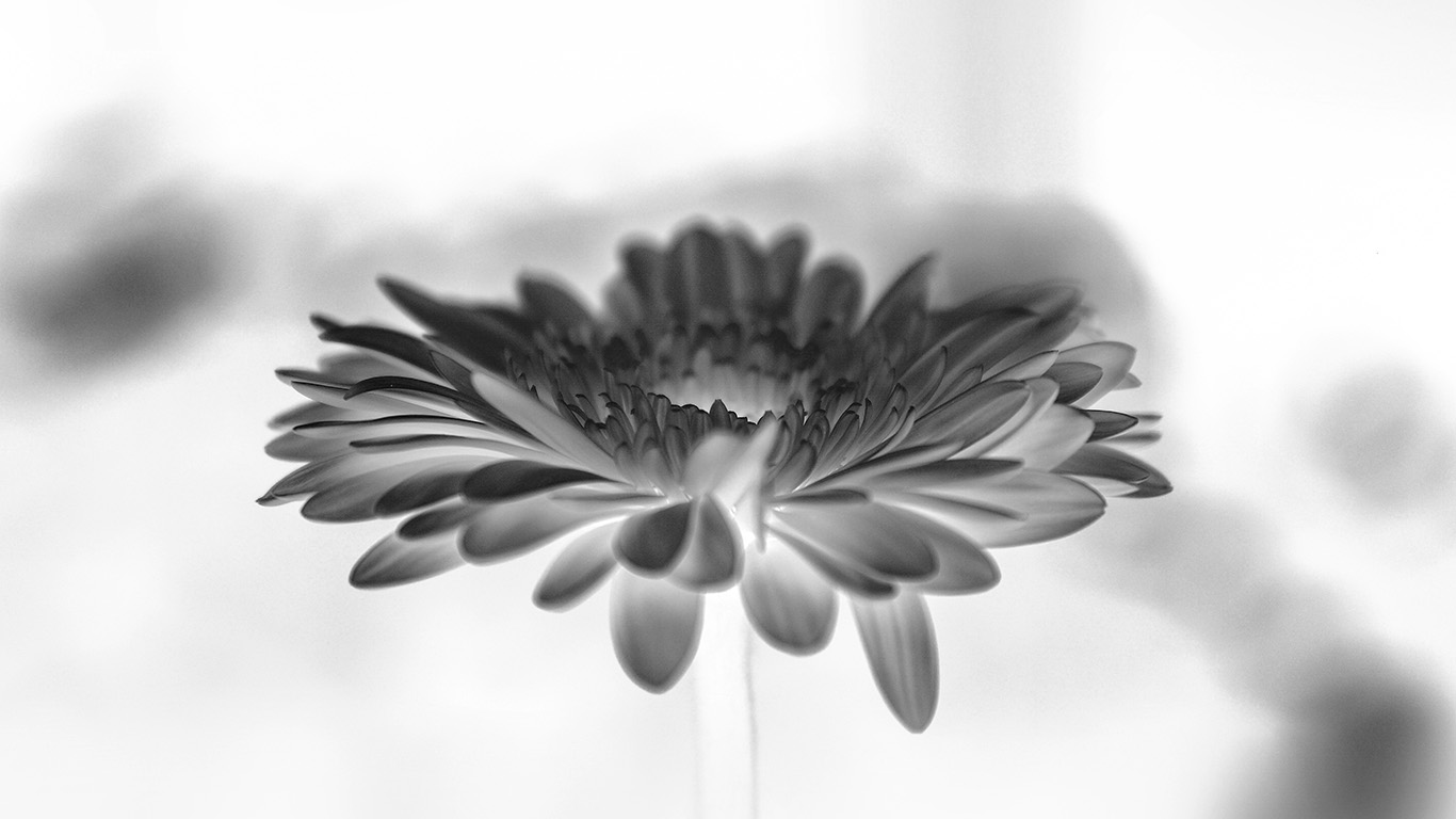 wallpaper-desktop-laptop-mac-macbook-my63-flower-white-calm-nature-bw