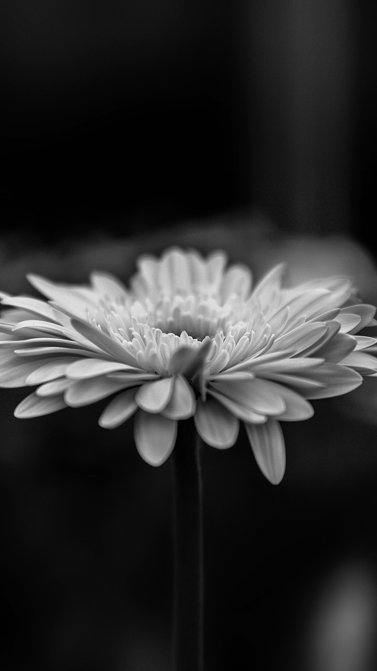 iPhone7papers.com-Apple-iPhone7-iphone7plus-wallpaper-my64-flower-calm-nature-bw-dark