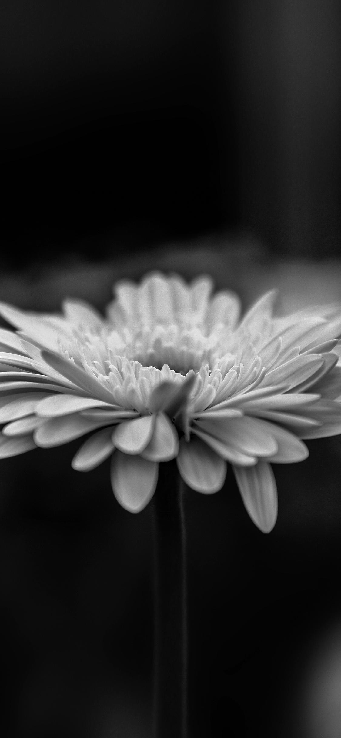 iPhonexpapers.com-Apple-iPhone-wallpaper-my64-flower-calm-nature-bw-dark