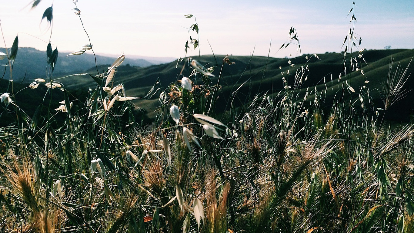 desktop-wallpaper-laptop-mac-macbook-air-my79-sunny-summer-day-green-grass-nature-mountain-wallpaper
