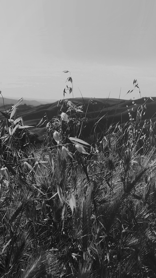 freeios8.com-iphone-4-5-6-plus-ipad-ios8-my82-sunny-summer-day-green-grass-nature-mountain-bw-dark