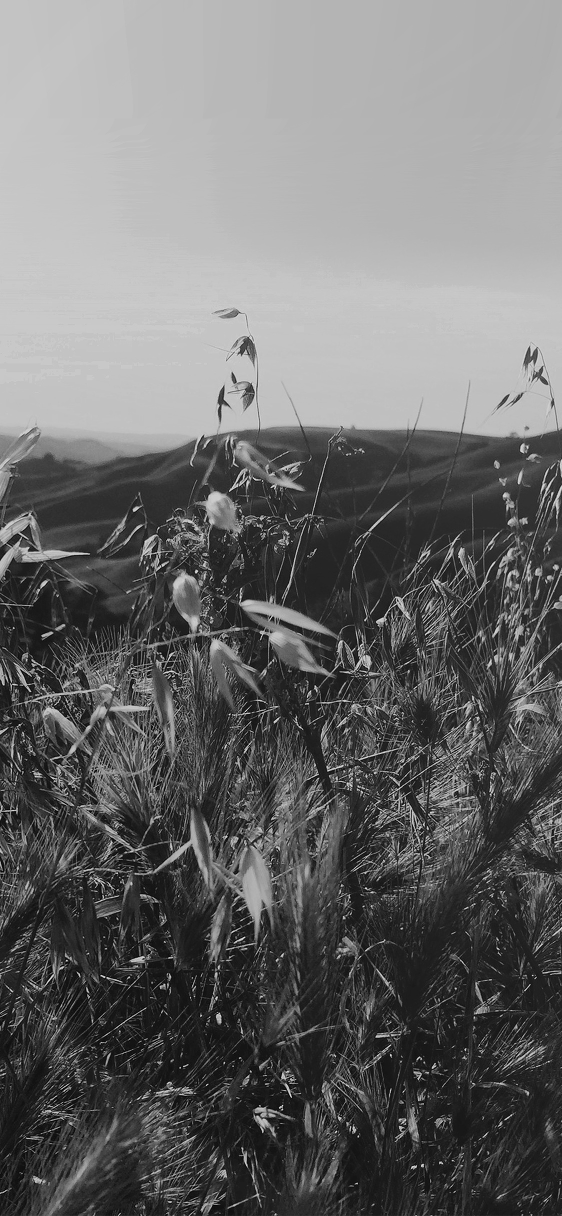 iPhoneXpapers.com-Apple-iPhone-wallpaper-my82-sunny-summer-day-green-grass-nature-mountain-bw-dark