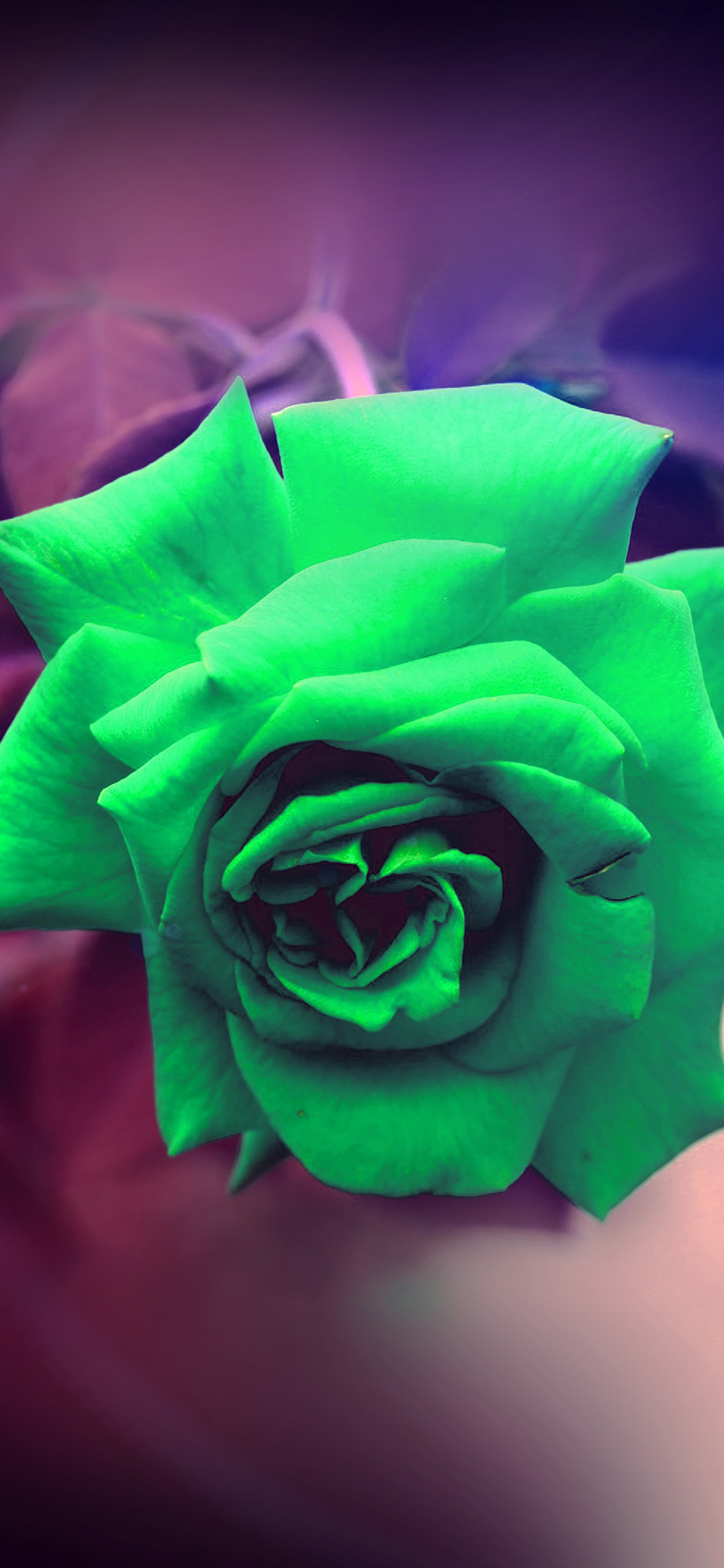 Iphonexpapers Com Iphone X Wallpaper My90 Green Rose