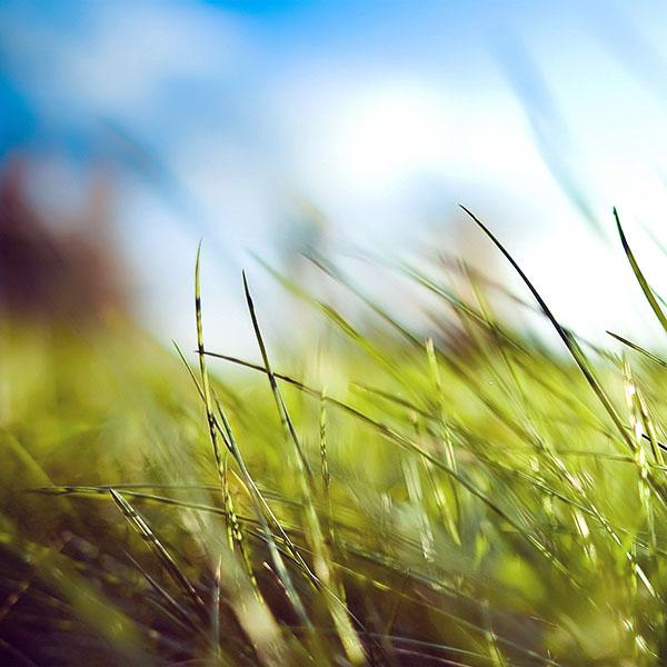 iPapers.co-Apple-iPhone-iPad-Macbook-iMac-wallpaper-mz10-nature-green-grass-bokeh-summer-wallpaper