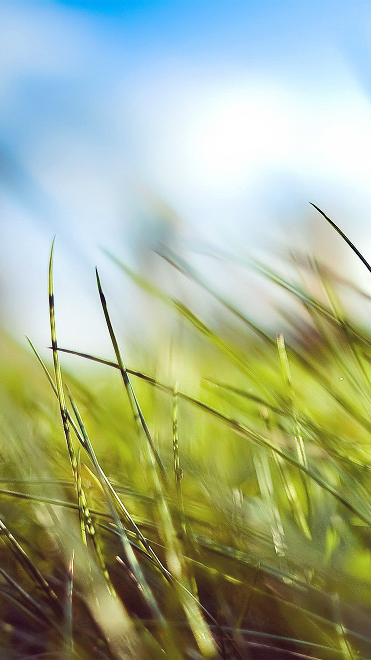 iPhone6papers.co-Apple-iPhone-6-iphone6-plus-wallpaper-mz10-nature-green-grass-bokeh-summer