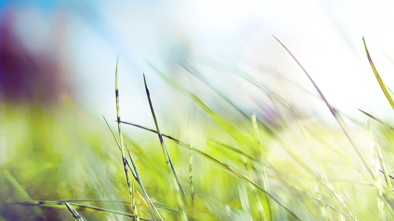 desktop-wallpaper-laptop-mac-macbook-air-mz11-nature-green-grass-bokeh-summer-flare-wallpaper