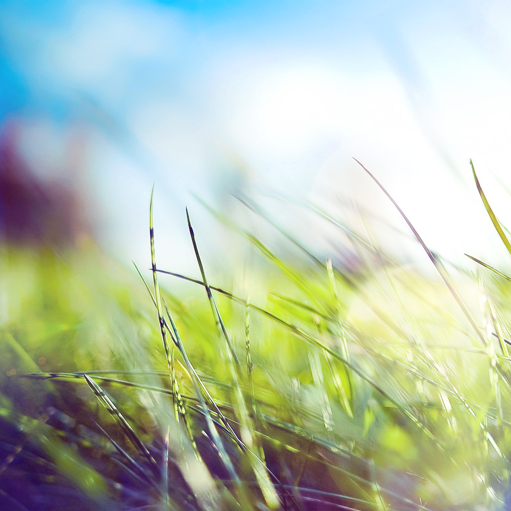 wallpaper-mz11-nature-green-grass-bokeh-summer-flare-wallpaper