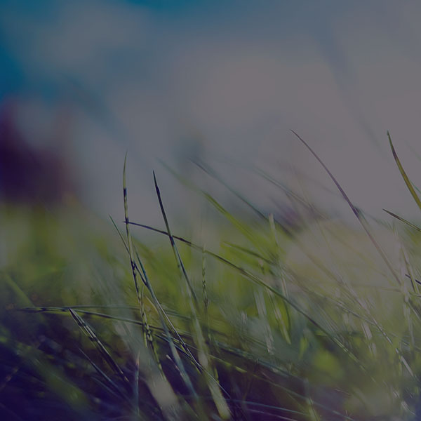 iPapers.co-Apple-iPhone-iPad-Macbook-iMac-wallpaper-mz12-nature-green-grass-bokeh-summer-dark-wallpaper