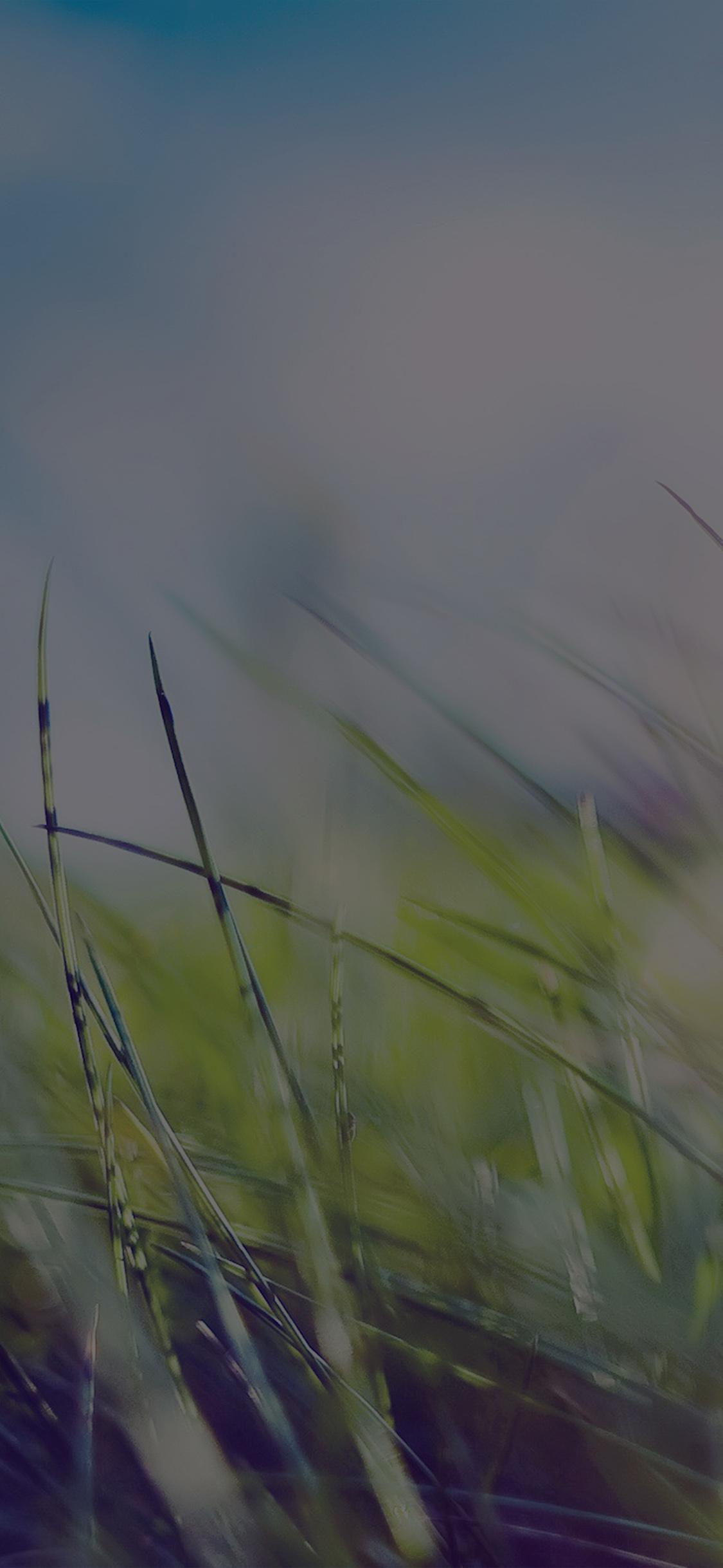 iPhoneXpapers.com-Apple-iPhone-wallpaper-mz12-nature-green-grass-bokeh-summer-dark