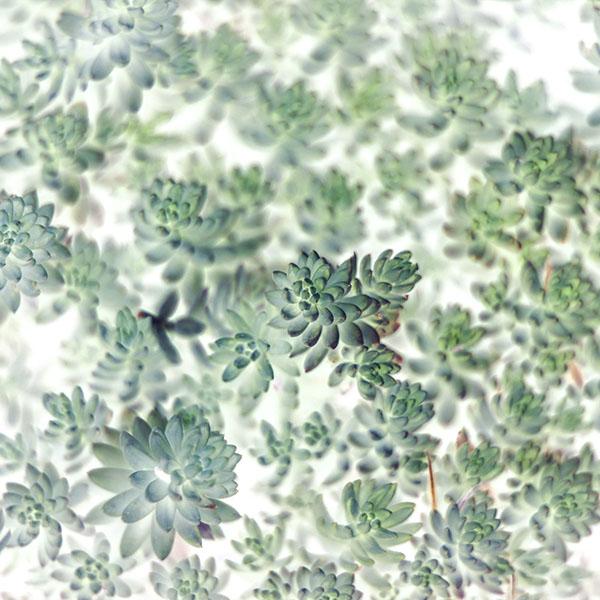 iPapers.co-Apple-iPhone-iPad-Macbook-iMac-wallpaper-mz62-nature-leaf-green-flower-white-wallpaper