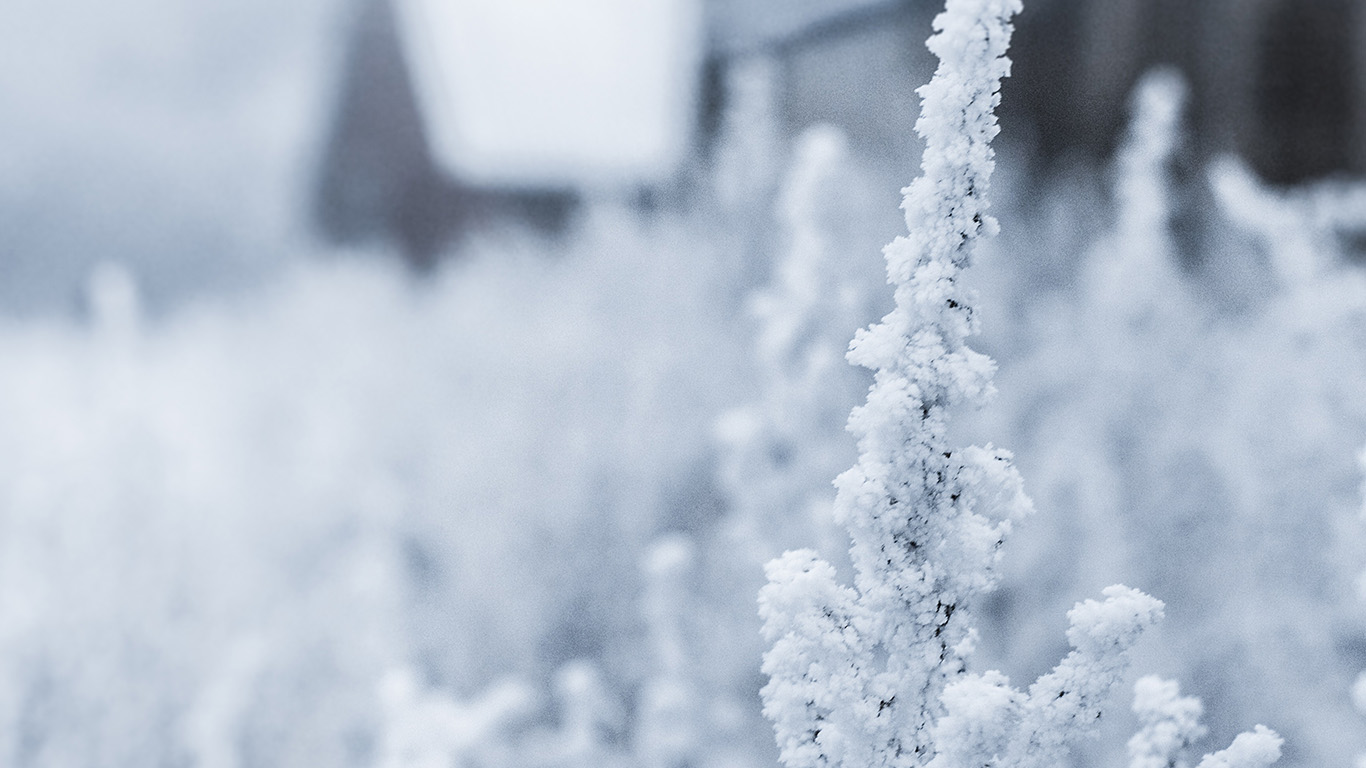 desktop-wallpaper-laptop-mac-macbook-air-mz69-snow-white-winter-flower-wallpaper