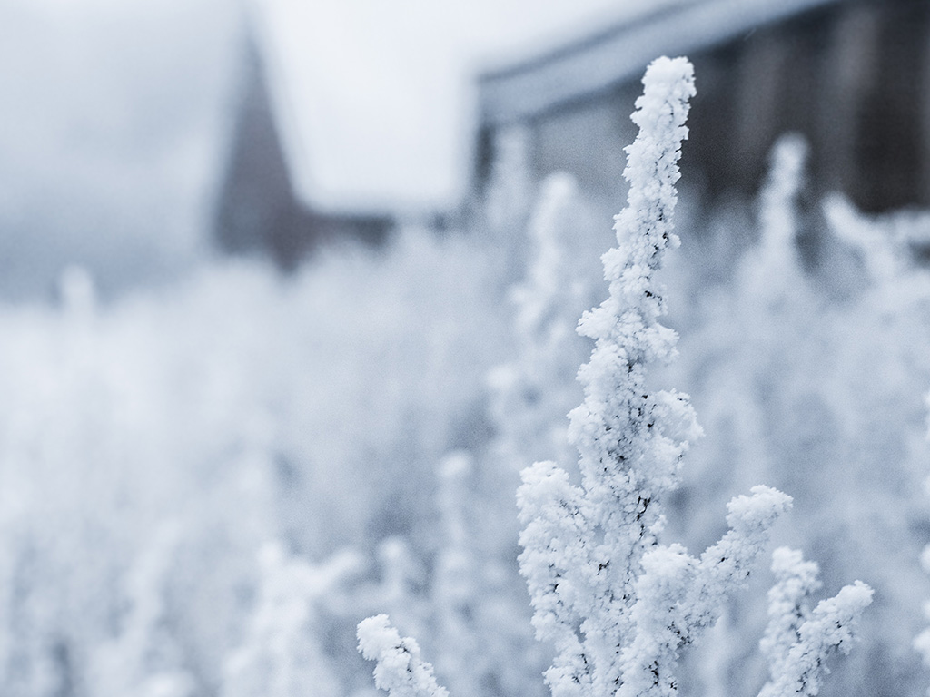 winter snow essays Winter is the coldest season of the year in some areas of the northern and southern hemisphere this season characterized by falling snow and low temperatures.