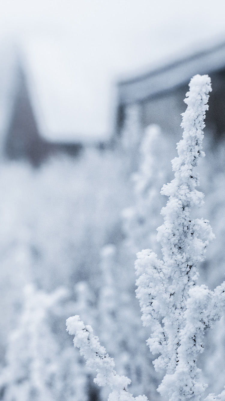 iPhone6papers.co-Apple-iPhone-6-iphone6-plus-wallpaper-mz69-snow-white-winter-flower
