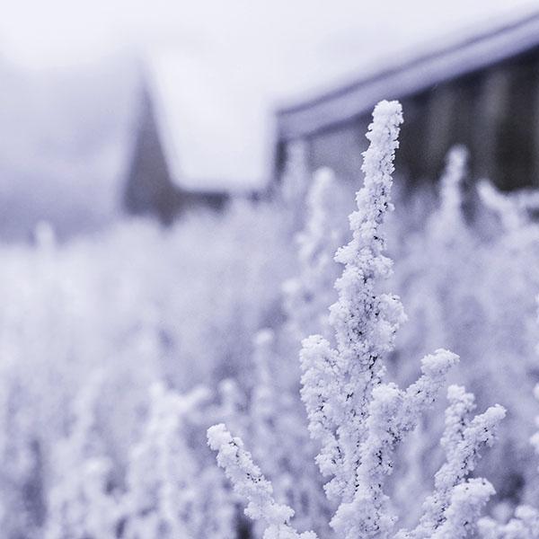 iPapers.co-Apple-iPhone-iPad-Macbook-iMac-wallpaper-mz70-snow-white-winter-flower-blue-wallpaper