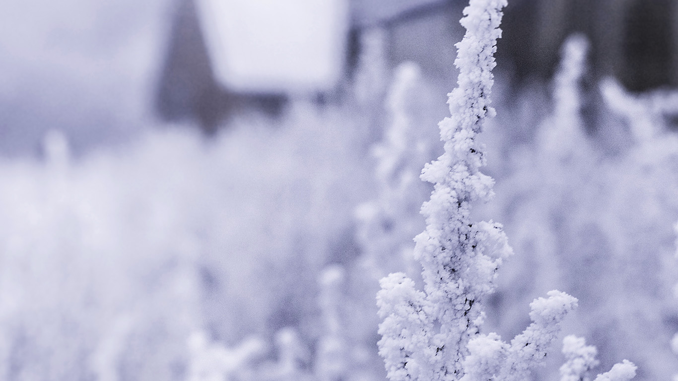 desktop-wallpaper-laptop-mac-macbook-air-mz70-snow-white-winter-flower-blue-wallpaper