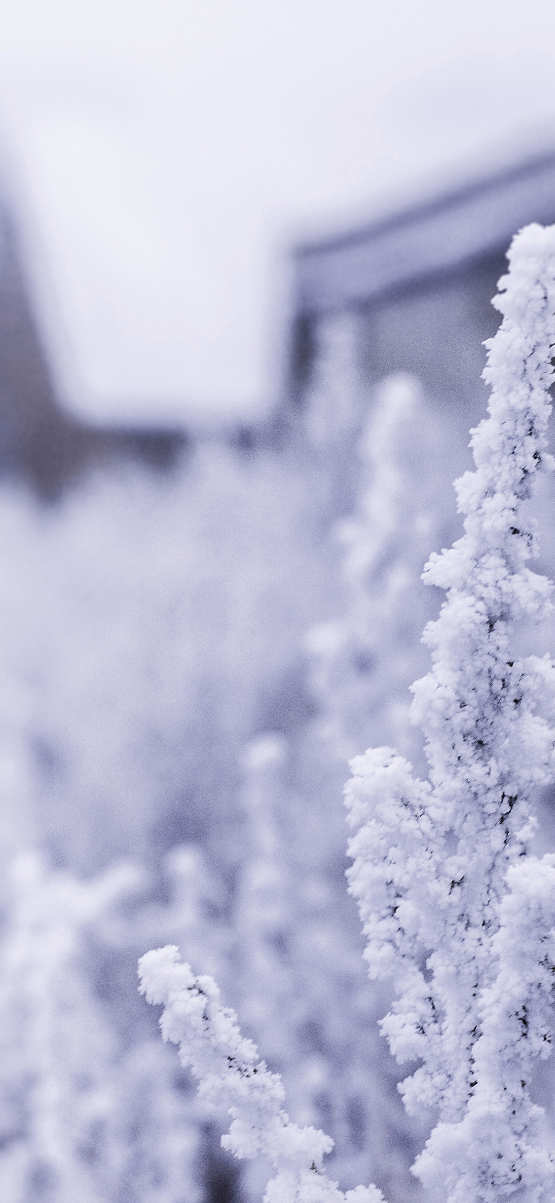 iPhoneXpapers.com-Apple-iPhone-wallpaper-mz70-snow-white-winter-flower-blue