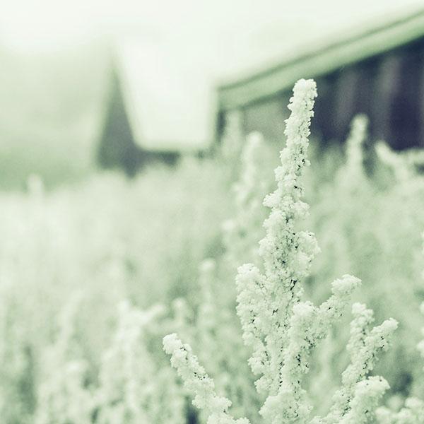 iPapers.co-Apple-iPhone-iPad-Macbook-iMac-wallpaper-mz71-snow-white-winter-flower-blue-green-wallpaper
