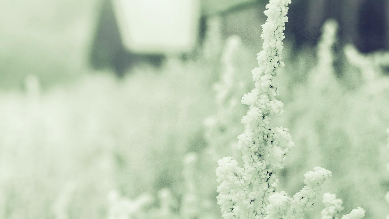 desktop-wallpaper-laptop-mac-macbook-air-mz71-snow-white-winter-flower-blue-green-wallpaper