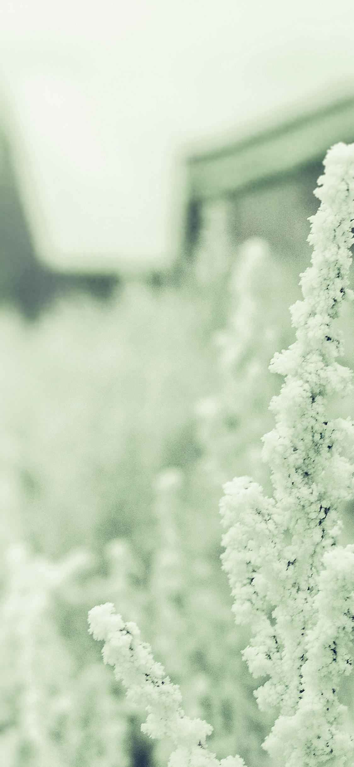Mz71 Snow White Winter Flower Blue Green Wallpaper
