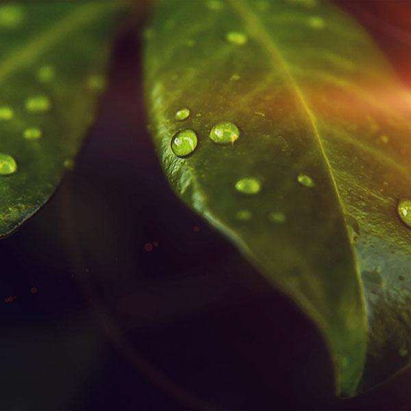 iPapers.co-Apple-iPhone-iPad-Macbook-iMac-wallpaper-mz76-leaf-rain-drop-green-nature-flare-wallpaper
