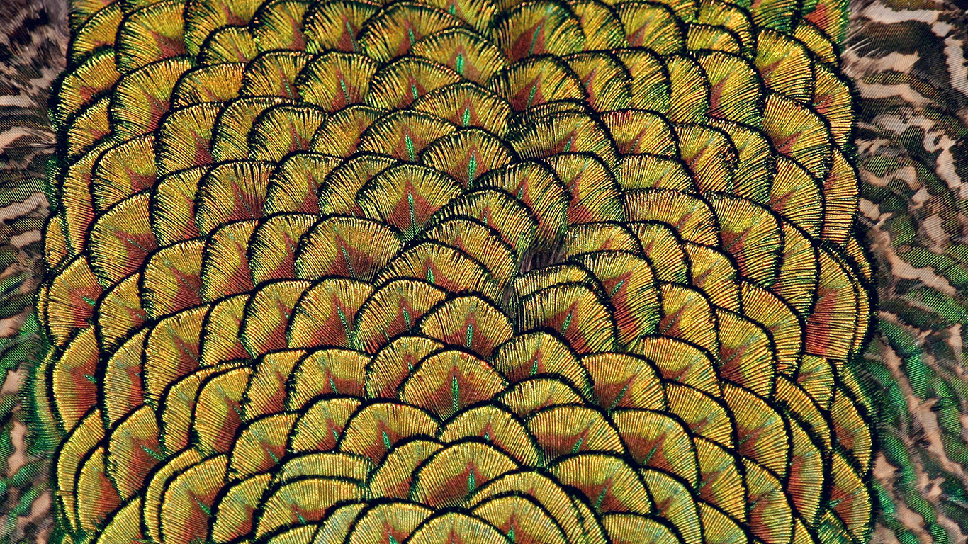 desktop-wallpaper-laptop-mac-macbook-air-mz88-peacock-bird-feather-wallpaper